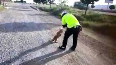 Kafası bidona sıkışan köpeği polis kurtardı - KAHRAMANMARAŞ