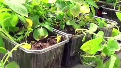 2 yerli patates isim bekliyor...Yeni patates tohum çeşidi için isim anketi düzenleniyor
