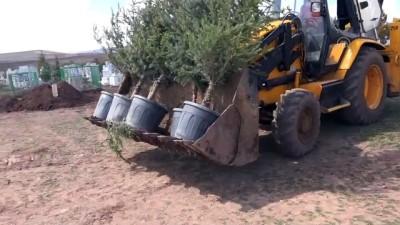 Yardım paralarıyla köy mezarlığı ağaçlandırılıyor - SİVAS