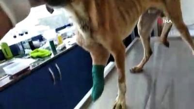 Yaralı köpekler için seferber oldular
