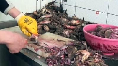 Dışı zehirli, içi lezzetli balık İskorpit