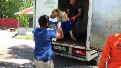Kamyonetin çarptığı köpek tedaviye alındı - KARABÜK