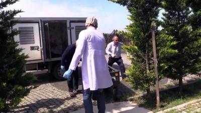 Zifte yapışan köpeğe belediye ekipleri sahip çıktı - KOCAELİ