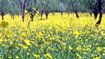 Şemdinli'de bahar - HAKKARİ