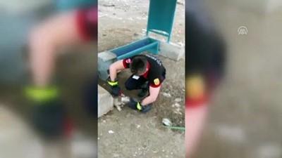 Başı kavanoza sıkışan yavru köpek kurtarıldı - KIRKLARELİ