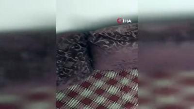 Eve giren 2 metrelik yılan paniğe neden oldu