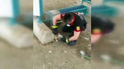 Kafasını cam kavanoza sıkıştıran köpeği itfaiye ekipleri kurtardı