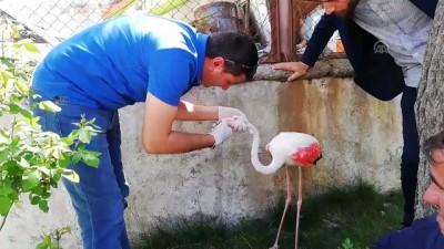 Yaralı flamingo tedavi altına alındı - HAKKARİ
