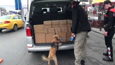 Özel eğitimli narkotik köpeği 'Kuki' vatandaşların ilgi odağı oldu