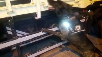narkotik -  Pul biber ile kamufle edilen eroin, narkotik köpeği Alfa'ya takıldı