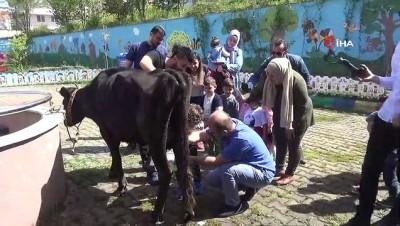 Anaokulu öğrencileri süt sağdı