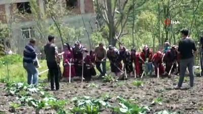 Giresun'da 400 yıllık gelenek yaşatılıyor...'İmece usulü ile ekin' Karadeniz'de başladı