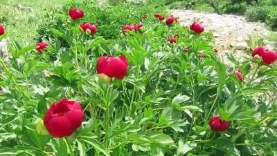 Bu çiçeği koparana 60 bin 163 lira ceza - AFYONKARAHİSAR
