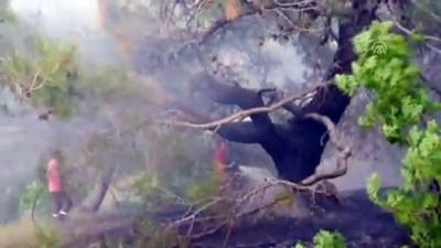 Orman yangını - ADIYAMAN