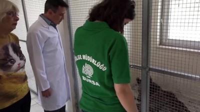 polis ekipleri - Yaralı ayı tedavi altına alındı - BİLECİK