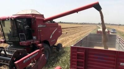 lyon - Adana'da buğday hasadı sürüyor