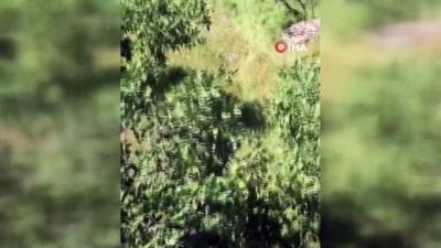 Kayıp keçinin imdadına Mehmetçik yetişti