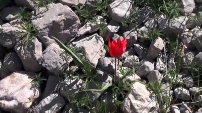guvenlik gucleri - Kırkmerdiven Şelaleleri doğal güzelliğiyle büyülüyor - TUNCELİ