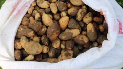 25 kilo salep soğanına 300 bin TL ceza kesildi