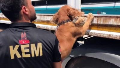 Adana'da bir tırın dorsesinde 250 kilo esrar ele geçirildi