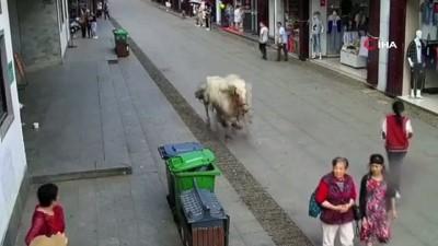 yasli kadin -  - Çin'de Hızla Koşan At Yayaları Ezdi
