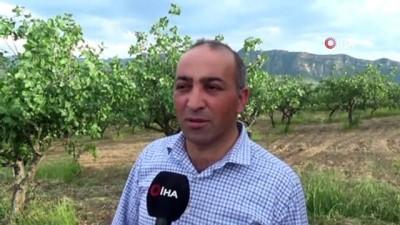 Kilosunun 120 liraya çıkması bekleniyor... Siirt'te yağışlardan en büyük zararı fıstık bahçeleri gördü