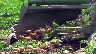'Patates tarlada 1,4 liraya kadar geriledi' - İZMİR