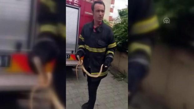 korkuluk - Apartmanın bahçe kapısına sıkışan yılan itfaiye ekiplerince kurtarıldı - İSTANBUL