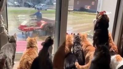 lyon -  - Kediler, çiftçiyi pür dikkat dakikalarca izledi