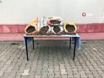 akalan -  Salep soğanı toplayanlara bugünde 240 bin TL ceza kesildi
