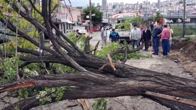 Samsun'da ağacın seyir halindeki otomobilin üzerine devrilme anı saniye saniye görüntülendi