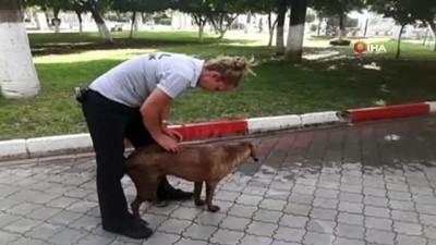 Sokak köpeğini bıçaklayarak, ölüme terk ettiler