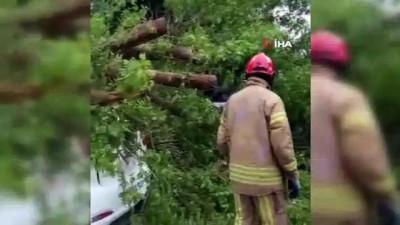 cami bahcesi -  Cami bahçesindeki aracın üzerine ağaç devrildi
