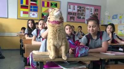 bir ayrilik - Kedi Tombi'ye hüzünlü veda - İZMİR