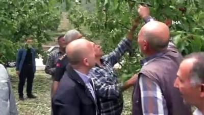 tarim -  Amasya'yı dolu vurdu