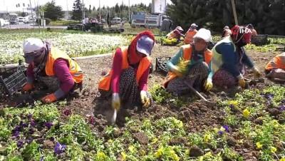 Ankara Büyükşehir Belediyesi, mevsimlik budama çalışmalarına hız verdi