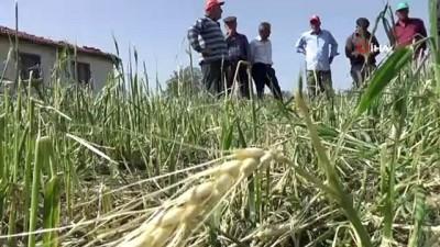 Doluzede çiftçiler devletten yardım bekliyor