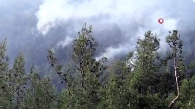 ihbar hatti -  Bilecik'te orman yangını: 2 dekar alan kül oldu