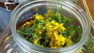 zeytinyagi -  Burhaniye'de Avrupa standartlarında kantaron yağı üretimine başlandı