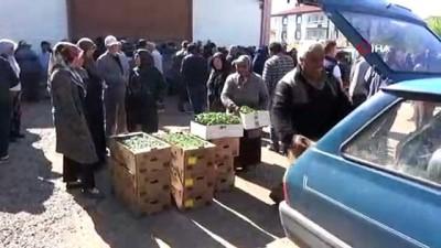 Aksaray'da Ziraat Odası çiftçilere 500 bin fide dağıttı
