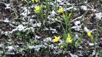 kar yagisi - Kars'ta mayıs ayında kar yağışı