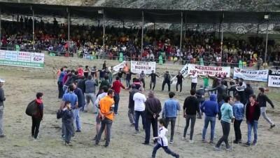 Boğa güreşi festivali - ARTVİN