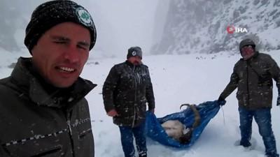 kar yagisi -  Hasta yaban keçisini av koruma memurları kurtardı