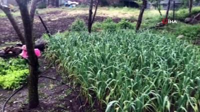 Çanakkale'de dolu yağışı meyve ve buğdaylara zarar verdi