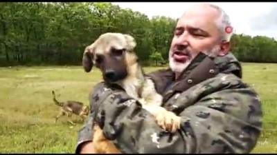 Beynine şant takılan köpek hayati tehlikeli atlattı