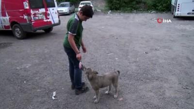 Minik köpeğin dondurma keyfi