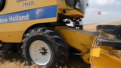 gubre -  Kurtalan'da buğday hasat dönemi başladı