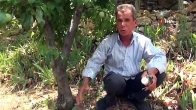 uzun omur -  Badem ağacından 5 tür meyve topluyor