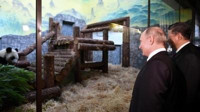 panda - Çin ve Rusya'dan panda diplomasisi: Putin ve Şi hayvanat bahçesini ziyaret etti