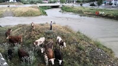 buyukbas hayvan -  Yağmur suları yükselince dere kenarında mahsur kaldılar